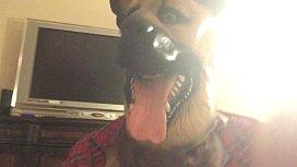 หนังโป้ สุนัขเย็ดกับคน โดนควยแดง ๆ กระเด้าเร็วฉิบหายหมาพันธ์ไรหว่ะเนี้ย แถมน้ำเชื้อไหลตลอดเต็มรูหี อย่างมันส์
